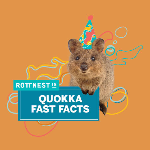 Quokka Birthday Fast Facts