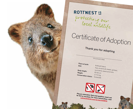 Soft Cat Food >> Rottnest Island | Adopt a Quokka!
